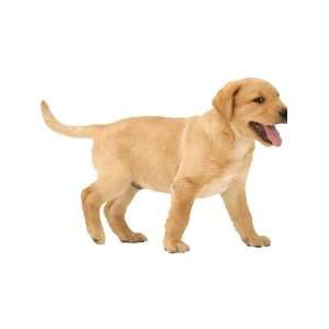 4Walls Animals Puppy Love Yellow Lab Pup KP1208SA: Home Improvement