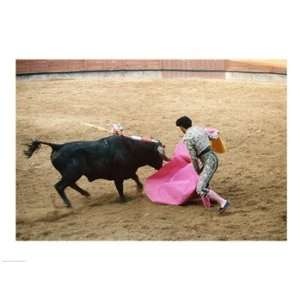 Matador fighting a bull, Plaza de Toros, Ronda, Spain Poster (24.00 x