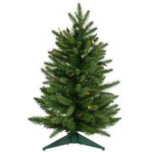 Christmas Tree   Frasier Fir   A890726