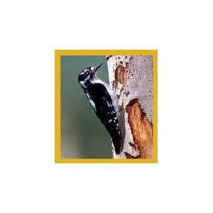New Magnetic Bookmark Downy Woodpecker High Quality Modern
