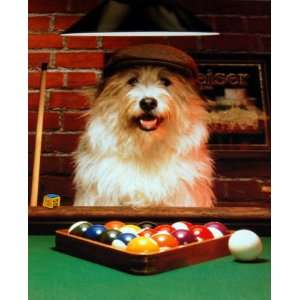 Dog Gone Pool    shrink wrapped, shipped flat poster 16 x