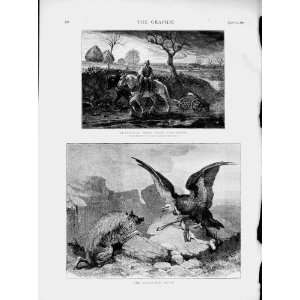 1873 Farmer Ploughing Horses Vulture Bird Wild Animals