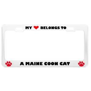 A Maine Coon Cat Pet White Metal License Plate Frame Tag