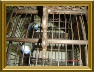 Dynasty C1890 STUNNING! ROSEWOOD BIRD CAGE W/ DRAGONS RARE!