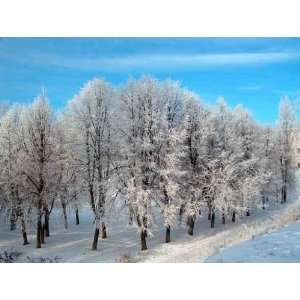 Wallmonkeys Peel and Stick Wall Decals   Winter Trees