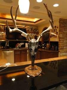Mule Deer Pedestal Mount VELVET on Antlers SHEDS WHITE TAIL