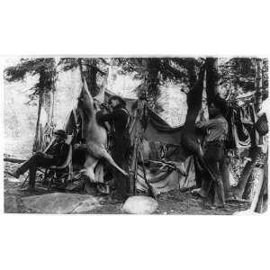 deer,camping,hunting,bucks,tents,dwellings,men,equipment,trees